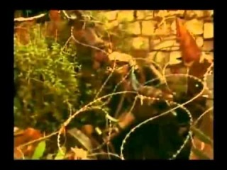 Ambush in Mogadishu - The real 'Black Hawk Down' story