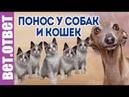 Как лечить понос у собак и 9 котят Не зарастает купированный хвост.