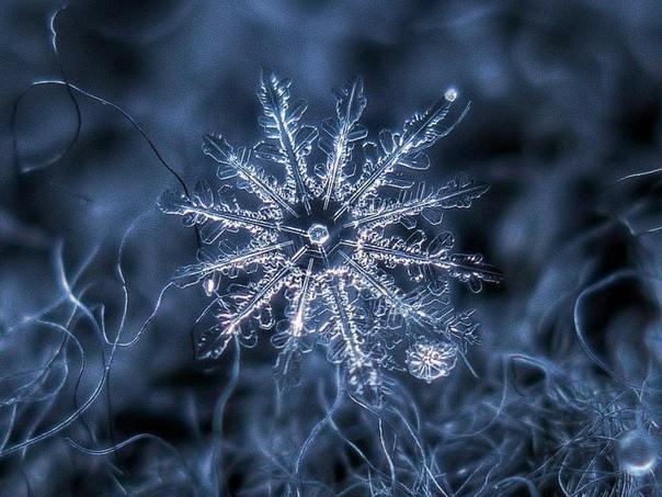 Снежинки, как и люди всегда отличаются друг от...