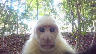 Capuchin monkey tries to steal my GoPro