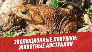 Эволюционные ловушки: Животные Австралии