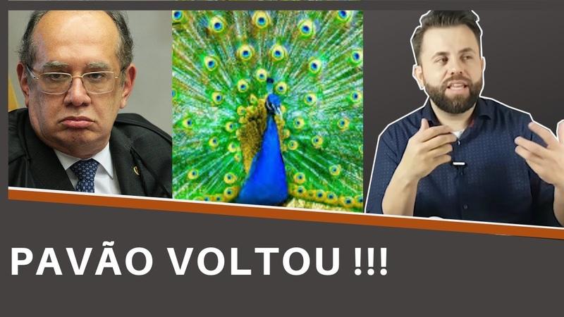 O PAVÃO VOLTOU Gilmar Mendes precisa se explicar