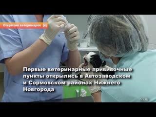 Первые ветеринарные прививочные пункты начали работать в Нижнем Новгороде