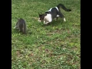 Теперь котик, отправится в КотДом!
