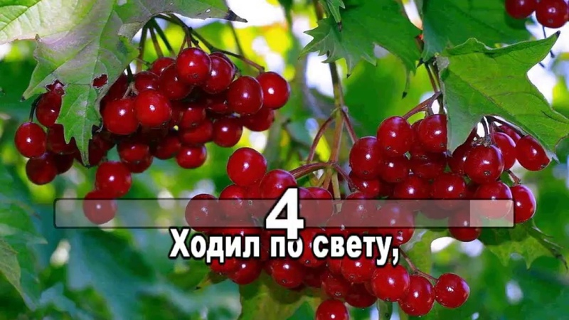 Галина КАРАОКЕ