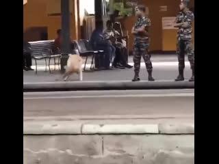 Служебный пес!