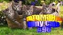 Смешные коты Приколы с котами Видео про котов Котомания 96