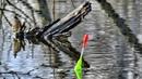 РЫБАЛКА С ВАНЬКОЙ! ПОПАЛИ В ПЛЕН! Рыба была не в курсе что мы будем рыбачить