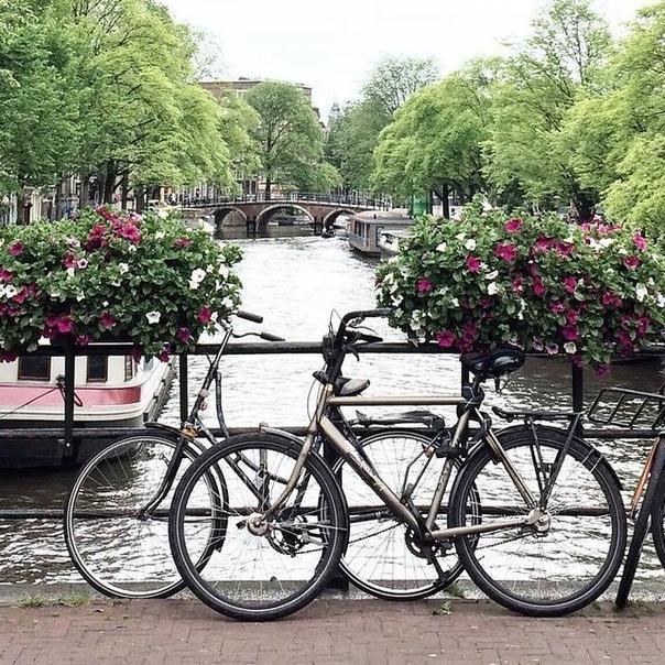 Петербург: авиабилеты в Амстердам от 9000 туда-обратно из Москвы летом