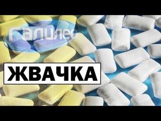 Галилео | Жвачка 👄 [Chewing gum]