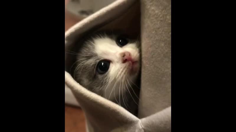 Happy Cat Club happycatclub posted on Instagram from 西澳少女野 double tap ❤❤ happycatclub CFGf7EpDVIx MP4 m