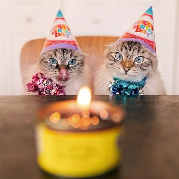 прикольные картинки отмечаю день рождения