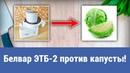 Электрошинковка Амкодор-Белвар ЭТБ-2. Часть 3 (шинкуем капусту).