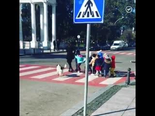Собака следит за порядком на дороге