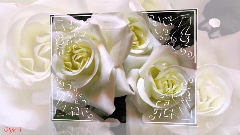 Белые розы надежды!