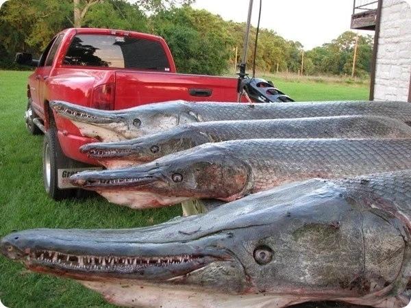 Техасские бабушки на рынке продают именно такую рыбу