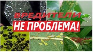 💪  💥  Мощнейшее средство от всех известных насекомых паразитов🕷 🕸  💣 !!! Клещ & червец, моя история.