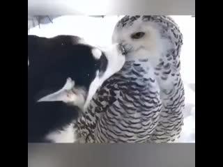 Все любят совушек