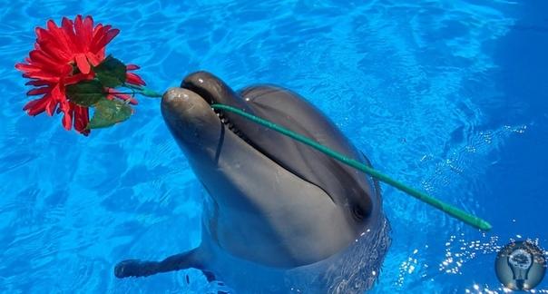 Ужасающие факты о дельфинах, живущих в неволе 1) Дельфин не может жить без движения. В дикой природе обычный дельфин проплывает в среднем около 100 километров в день, в бассейне столько не