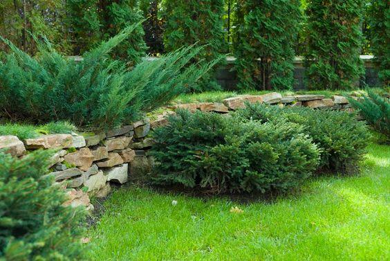 Хвойные растения: советы по подбору и посадке, изображение №1