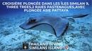 Croisière plongée dans les îles Similan 9 three trees 2 Raies Pastenagues avec plongee asie pattaya