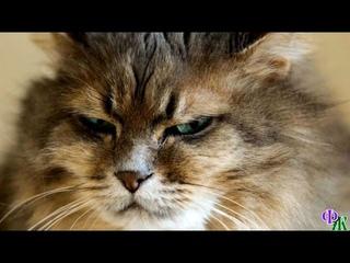 – Да, мои хозяева – скупердяи! Не ценят меня! – размышлял недовольный кот, развалившись в кресле