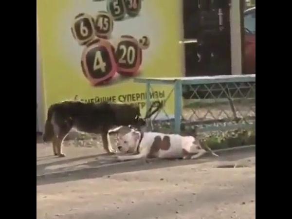 Теперь ты свободен в Новороссийске бездомная собака отвязала от забора породистого пса