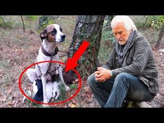 Егерь нашёл в лесу привязанную собаку со щенками. Подойдя к ней ближе, он чуть не потерял дар речи.