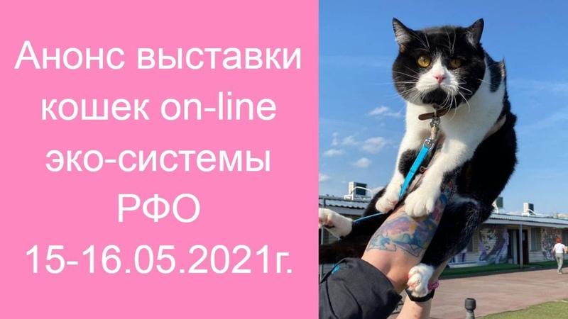 Анонс выставки кошек РФО 15 16 мая 2021г