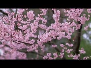 Музыкальный подарок - Shopen - Шопен Весенний вальс