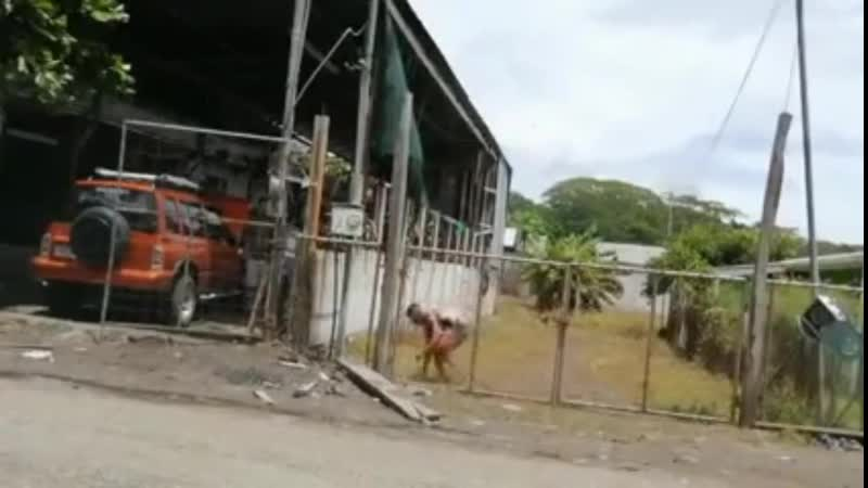 Лимонный вор vs Электрический забор