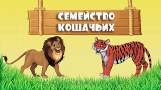 Развивающие мультики для детей про семейство кошачьих (дикие кошки).  ТуттиМульти (TuttiMulti)