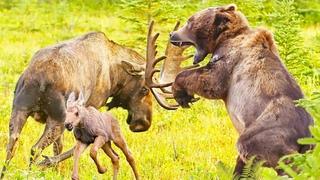 Битва с хищником. Что помогает животным выживать? || Все как у людей