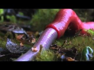 Monster leech swallows giant worm