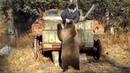 Если это не было снято никто бы не поверил, дикие звери сибирской тайги МИШКА-МИШЕЧКА-МЕДВЕДЬ