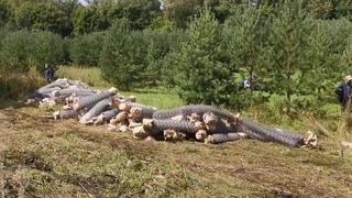 Первые кадры погромов лагеря защитников КУШТАУ организованных БСК