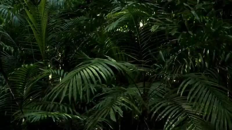 д ф Амазонка в дебрях Латинской Америки