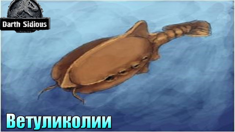 Развитие жизни на Земле The Evolution of Life Ветуликолии Vetulicolia