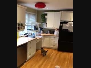 Вот это котик!