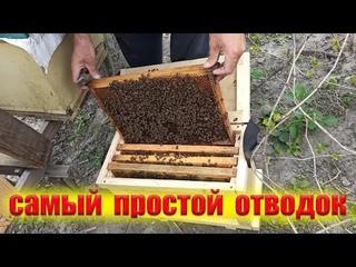 Как сделать отводок пчел. Самый простой отводок пчел для начинающих пчеловодов
