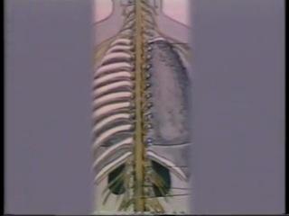 """Анатомия и физиология человека. Фильм 2 """"Нервная система"""" (Леннаучфильм, 1980)"""