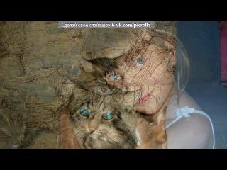 барсик под музыку Песня про кота - Ты мой миленький,хороший котик,положу тебе сарделичку я в ротик:))))). Picrolla