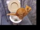 смех и слезыкот срет в унитаз/laughter and tearscat shit in the toilet