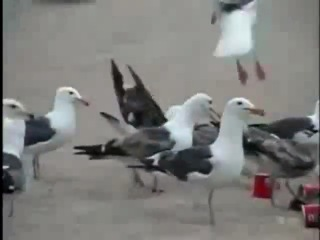 Kids feed laxatives to seagulls down by the beach