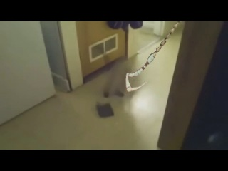 Pudge hook cat (not vine)