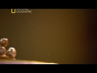 National Geographic HD ru Секретные материалы древности Святой грааль 2011 National Geographic HD ru Confidential materials of an antiquity Sacred Graal 2011