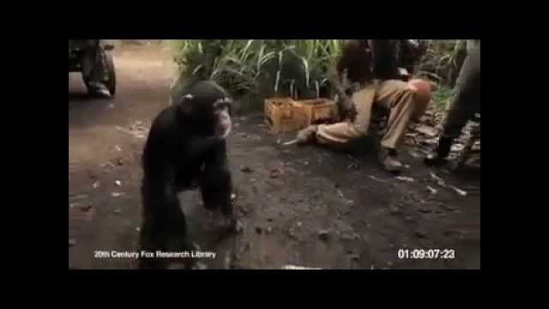 Maymuna Silah Verirsen O da Seni Maymun Eder :)).mp4