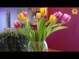 Маленький секрет Что нужно сделать, чтобы тюльпаны стояли долго? Дачные хитрости и полезные советы