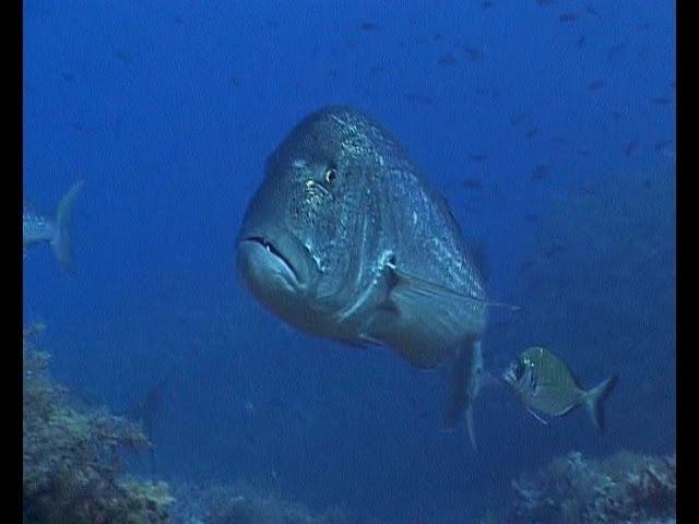 Pescasub Catture profonde deep spearfishing in CW