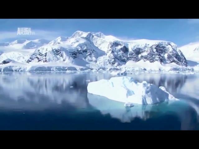 Антарктида. Дикая природа. В мире льда. Документальный фильм